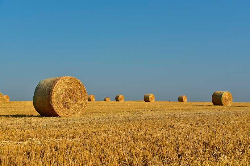 Розірвання договору оренди земельної ділянки (ПАЮ)